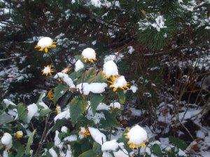 winterbeginn-110