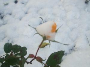 winterbeginn-114