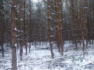 winterbeginn-125