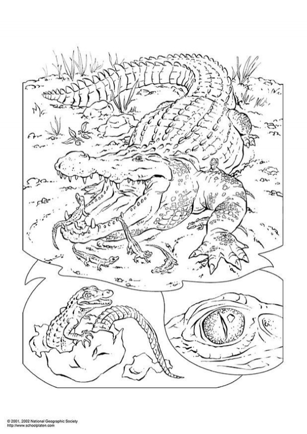 de-malvorlagen-ausmalbilder-foto-krokodil-p3053