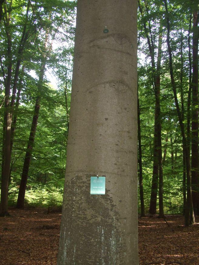 Gemeinschaftsbaum1