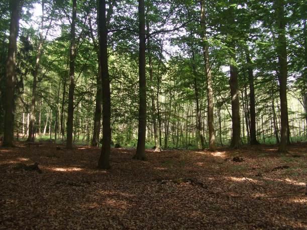 Waldfriedhof2