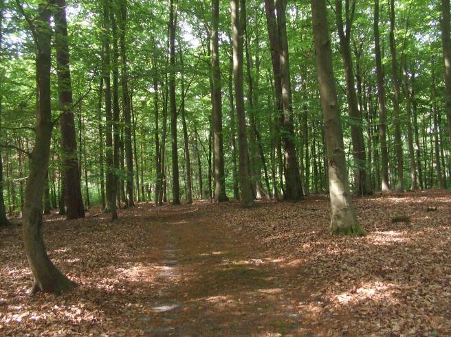 Waldfriedhof3