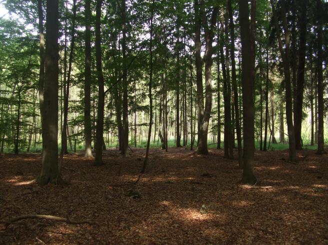 Waldfriedhof4